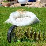Vorsicht beim Vertikutieren eines jungen Rasens
